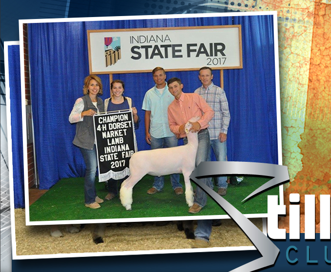 Stillwell Club Lambs | Frankfort, Indiana